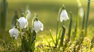 przebisniegi-wiosna-2